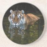 Práctico de costa del tigre de Bengala Posavasos Para Bebidas