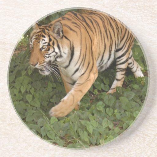 Práctico de costa del tigre de Bengala Posavasos Cerveza