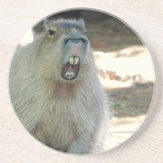 Práctico de costa divertido del Capybara Posavasos Cerveza