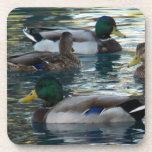 Práctico de costa fijado - pato, pato, pato, pato posavaso