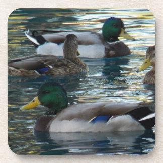 Práctico de costa fijado - pato, pato, pato, pato posavasos de bebida
