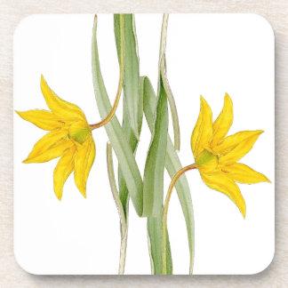 Práctico de costa floral de la flor botánica del posavasos para bebidas
