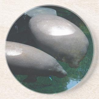 Práctico de costa flotante de los Manatees Posavasos Diseño