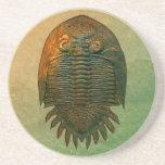 Práctico de costa fósil de Neometacanthus Trilobit Posavasos Para Bebidas