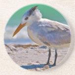 Práctico de costa real del pájaro de la golondrina posavasos manualidades