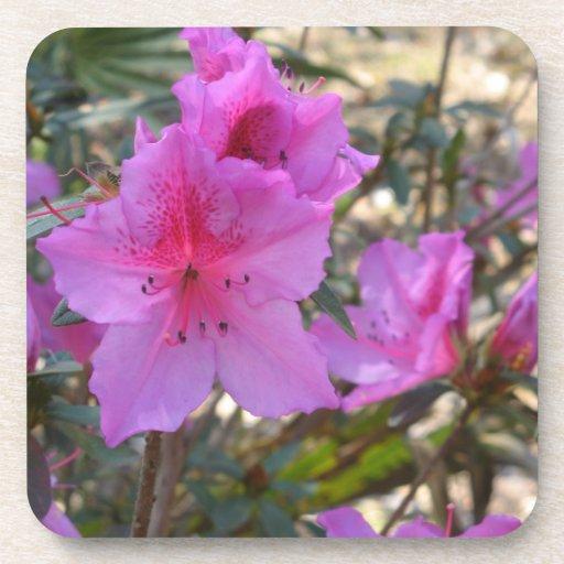 Práctico de costa rosado del corcho de las flores  posavasos de bebida