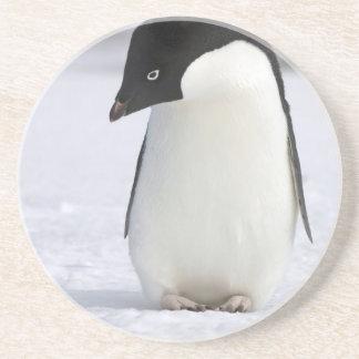 Práctico de costa solo del pingüino posavasos para bebidas