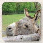 Práctico de costa soñoliento del burro posavaso