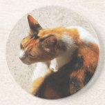 Práctico de costa tricolor del gato posavasos personalizados