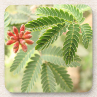 Práctico de costa tropical del corcho de las hojas portavasos