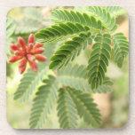 Práctico de costa tropical del corcho de las hojas posavasos