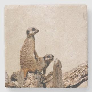 Práctico de costa único de Meerkat Posavasos De Piedra