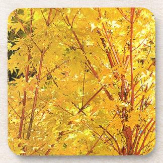 Prácticos de costa amarillos de las hojas de arce posavasos