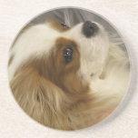 Prácticos de costa arrogantes del perro de aguas d posavasos personalizados