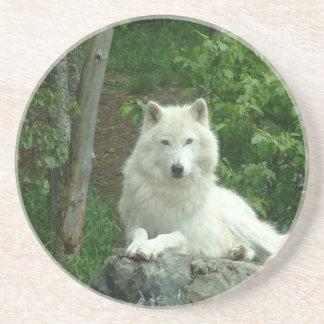 Prácticos de costa árticos del lobo posavasos diseño