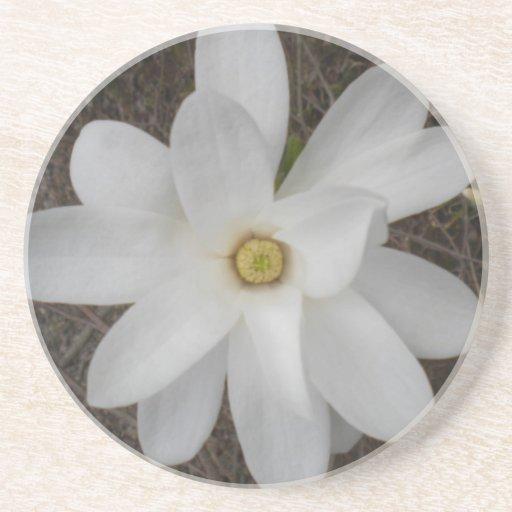 Prácticos de costa blancos del flor de la magnolia posavasos personalizados