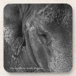 Prácticos de costa de la bebida del ojo del elefan posavasos