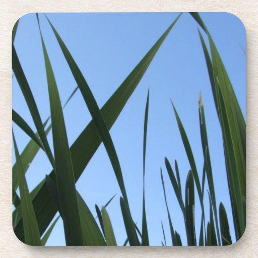 Prácticos de costa de la hierba posavasos