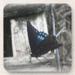 Prácticos de costa de la memoria de la mariposa posavasos