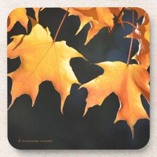 Prácticos de costa de las hojas de arce posavaso