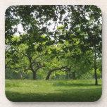 Prácticos de costa del árbol posavasos