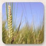 Prácticos de costa del campo de maíz posavasos