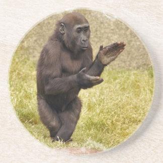 Prácticos de costa del chimpancé posavasos cerveza