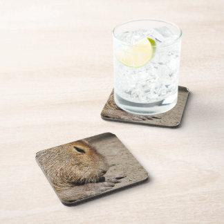 Prácticos de costa del corcho del Capybara Posavasos De Bebida