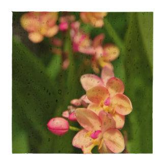 Prácticos de costa del corcho del Orchidaceae Posavasos