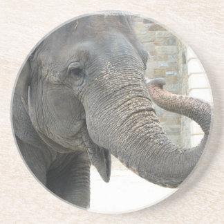 Prácticos de costa del elefante que tocan la tromp posavaso para bebida