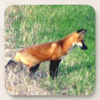 Prácticos de costa del Fox rojo Posavasos De Bebidas