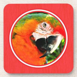 Prácticos de costa del Macaw del escarlata fijados Posavaso