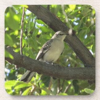 Prácticos de costa del Mockingbird Posavaso