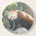 Prácticos de costa del oso de panda roja posavasos manualidades