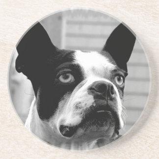 Prácticos de costa del perro de Boston Terrier Posavasos Cerveza