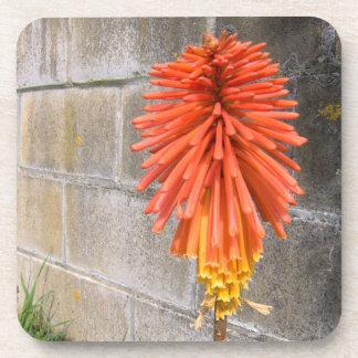 Prácticos de costa del personalizado de la flor posavaso