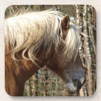 Prácticos de costa equinos del amante del caballo posavasos