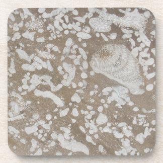 Prácticos de costa fósiles devonianos de la bebida posavasos