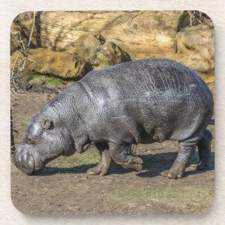 Prácticos de costa plásticos duros del hipopótamo posavaso