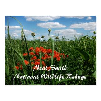 Pradera alta de la hierba, refugio de Neal Smith, Postal