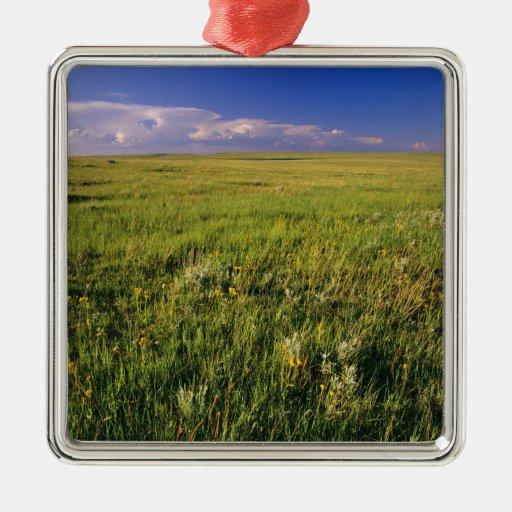 Pradera corta de la hierba en del noreste alejado adorno navideño cuadrado de metal