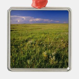 Pradera corta de la hierba en del noreste alejado ornamentos para reyes magos