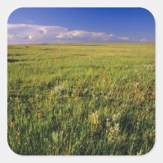 Pradera corta de la hierba en del noreste alejado calcomanías cuadradass personalizadas