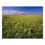 Pradera corta de la hierba en del noreste alejado impresiones fotográficas