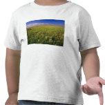 Pradera corta de la hierba en del noreste alejado camisetas