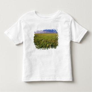 Pradera corta de la hierba en del noreste alejado poleras