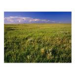Pradera corta de la hierba en del noreste alejado postales