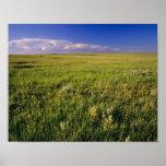 Pradera corta de la hierba en del noreste alejado póster