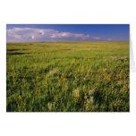 Pradera corta de la hierba en del noreste alejado tarjeta de felicitación