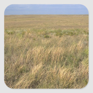 Pradera del prado al este de Sidney, Nebraska Calcomanias Cuadradas